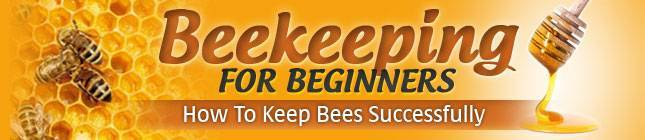 Beekeeping business beekeeping for profit honey bees business - Beekeeping beginners small business ...